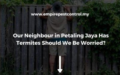 Our Neighbour in Petaling Jaya Has Termites Should We Be Worried?