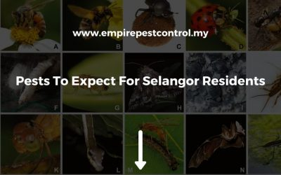 Pests To Expect For Selangor Residents