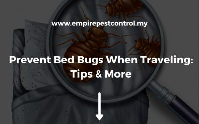 How To Prevent Bed Bugs When Traveling