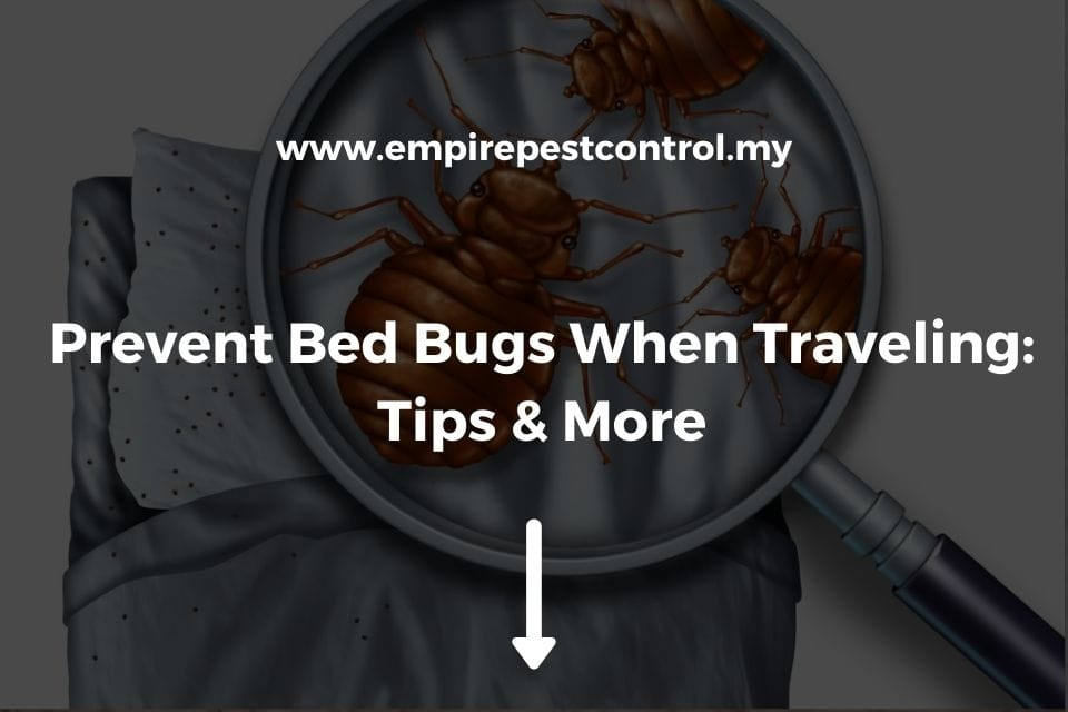 Prevent Bed Bugs When Traveling: Tips & More