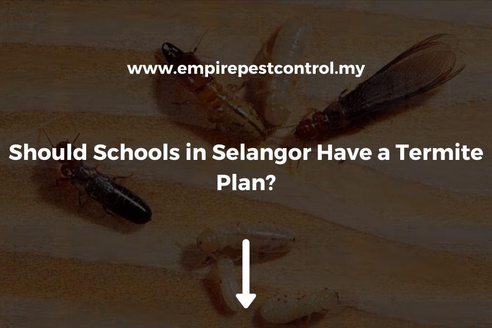 Should Schools in Selangor Have a Termite Plan