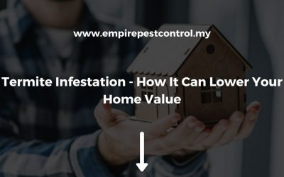 Termite Infestation – How It Can Lower Your Home Value