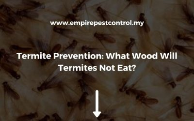 Termite Prevention: What Wood Will Termites Not Eat?
