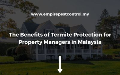 Benefits of Termite Protection for Property Managers in Malaysia