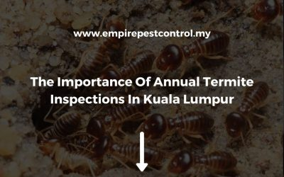 The Importance Of Annual Termite Inspections In Kuala Lumpur