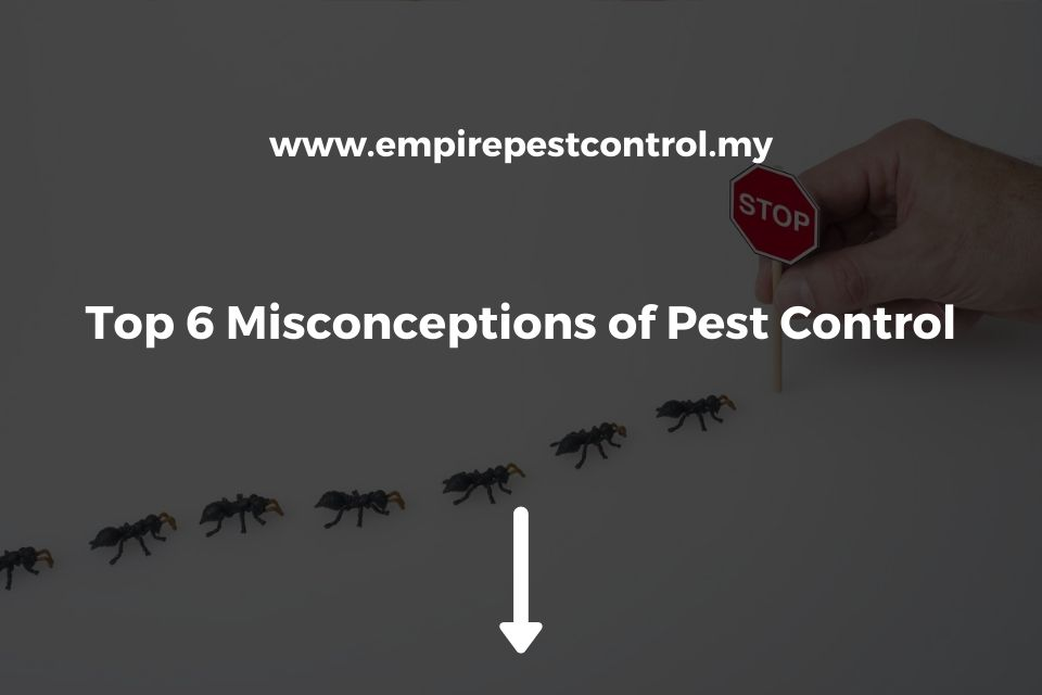 Top 6 Misconceptions of Pest Control
