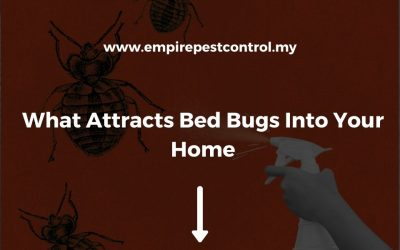 What Attracts Bed Bugs Into Your Home