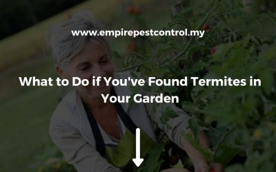 What to Do if You've Found Termites in Your Garden