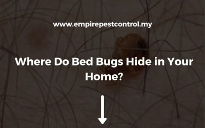 Where Do Bed Bugs Hide in Your Home?
