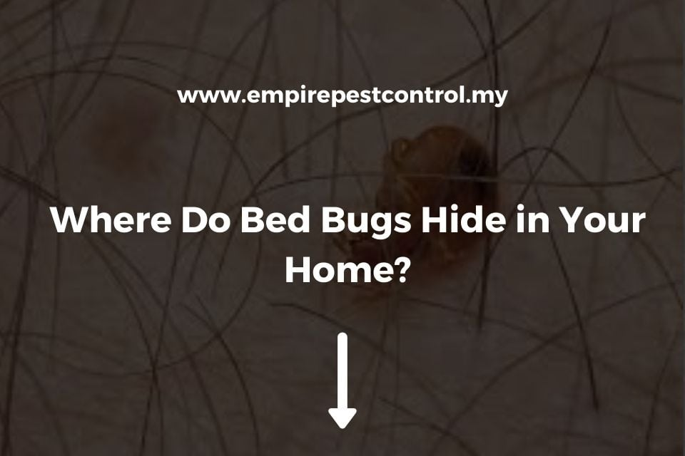 Where Do Bed Bugs Hide in Your Home