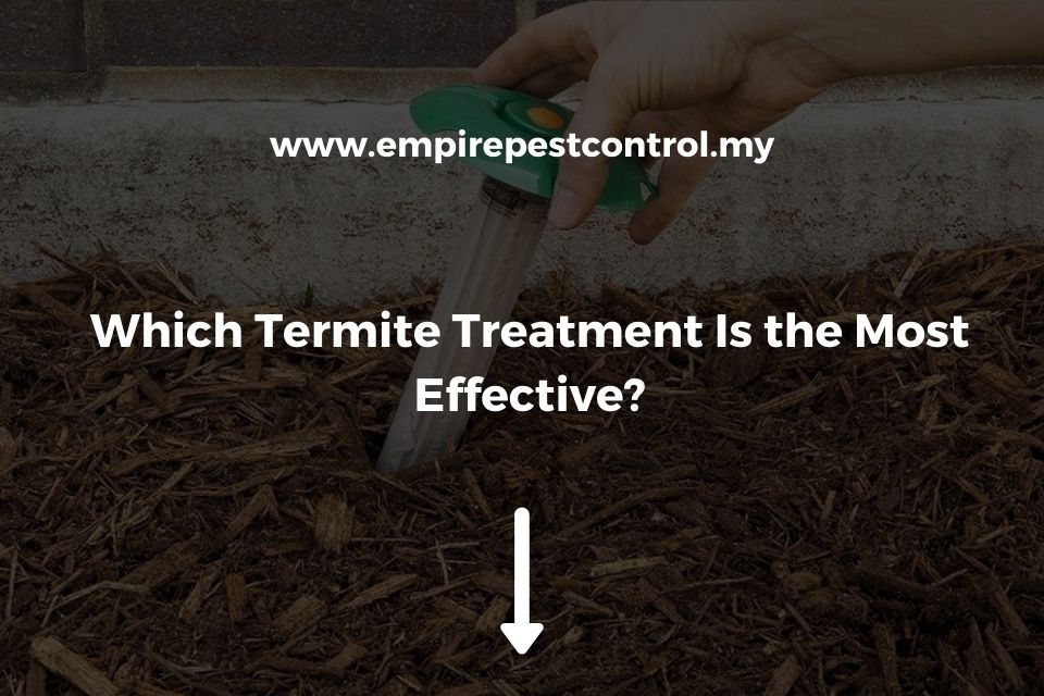 Which Termite Treatment Is the Most Effective?