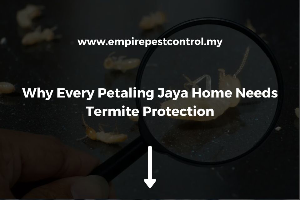 Why Every Petaling Jaya Home Needs Termite Protection