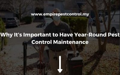 Why It's Important to Have Year-Round Pest Control Maintenance