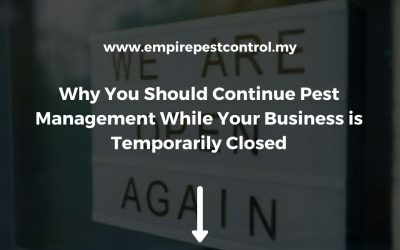 Why You Should Continue Pest Management While Your Business is Temporarily Closed