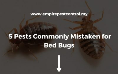 5 Pests Commonly Mistaken for Bed Bugs
