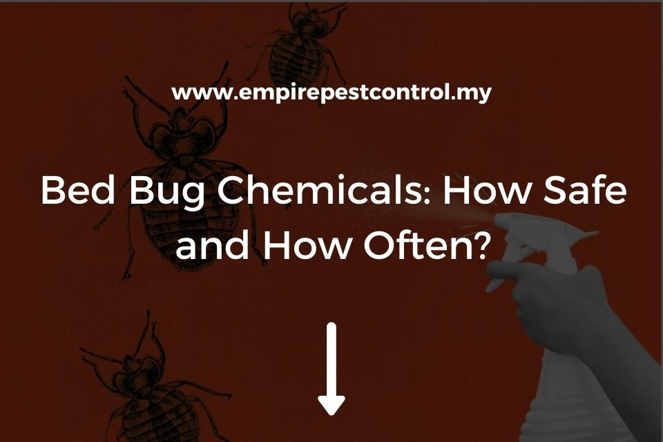 Bed Bug Chemicals: How Safe and How Often?