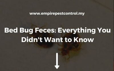 Bed Bug Feces: Everything You Didn't Want to Know