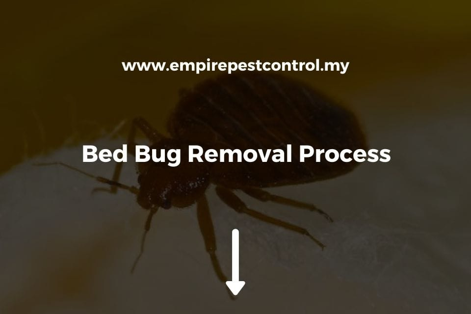 Bed Bug Removal Process