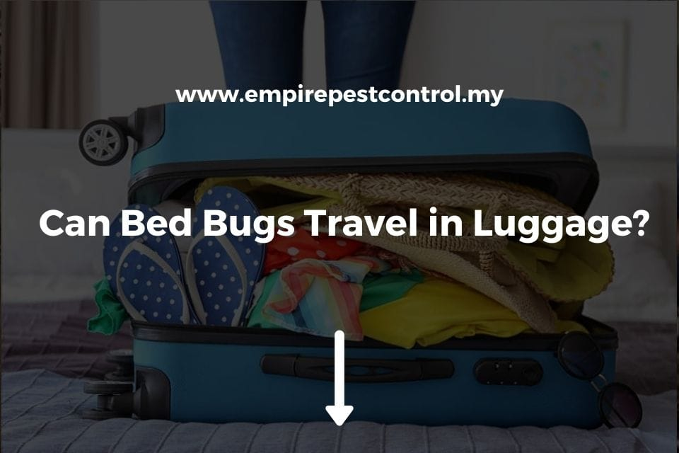 Can Bed Bugs Travel in Luggage?