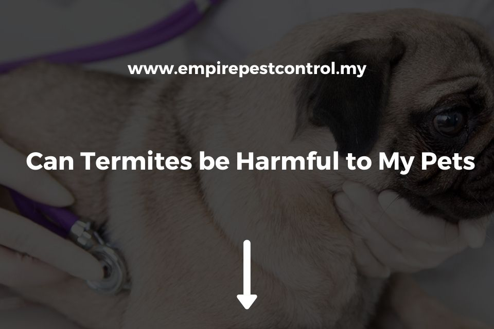 Can Termites be Harmful to My Pets?