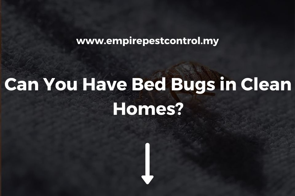 Can You Have Bed Bugs in Clean Homes?