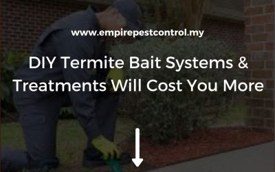 DIY Termite Bait Systems & Treatments Will Cost You More