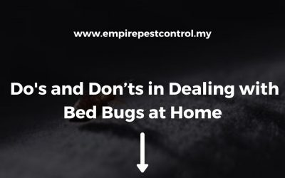 Dos and Don'ts in Dealing with Bed Bugs at Home