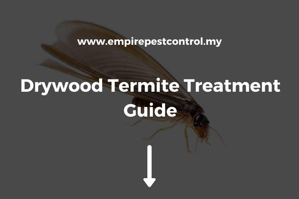 Drywood Termite Treatment Guide