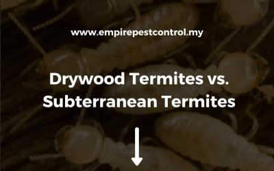 Drywood Termites vs Subterranean Termites