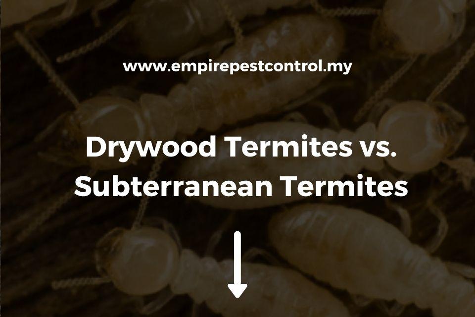 Drywood Termites vs. Subterranean Termites