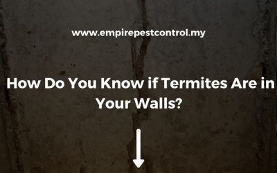 How Do You Know if Termites Are in Your Walls?