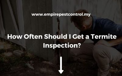 How Often Should I Get a Termite Inspection?