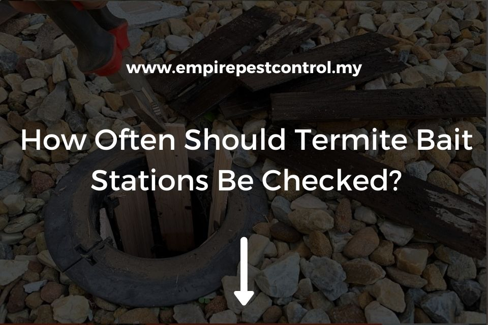 How Often Should Termite Bait Stations Be Checked?