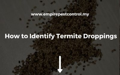 How to Identify Termite Droppings