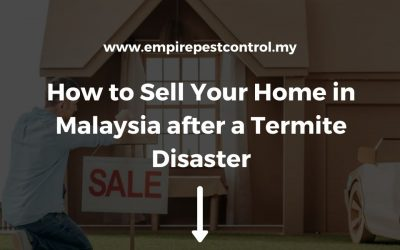 How to Sell Your Home in Malaysia after a Termite Disaster