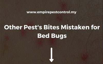 Other Pest's Bites Mistaken for Bed Bugs