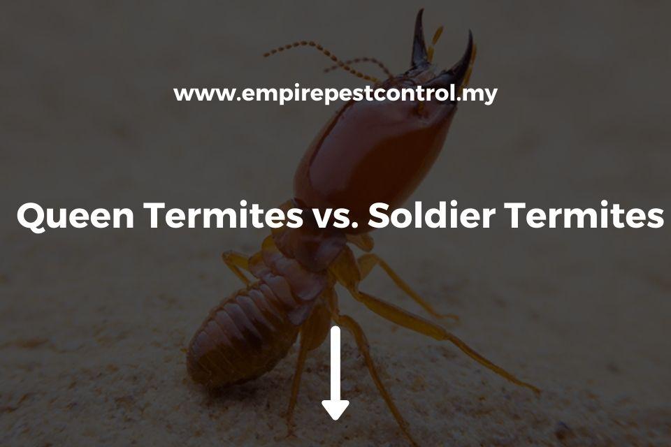 Queen Termites vs. Soldier Termites