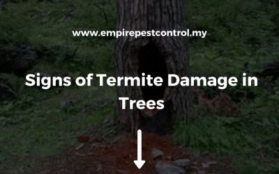 Signs of Termite Damage in Trees