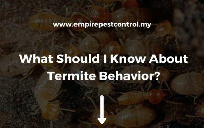 What Should I Know About Termite Behavior?
