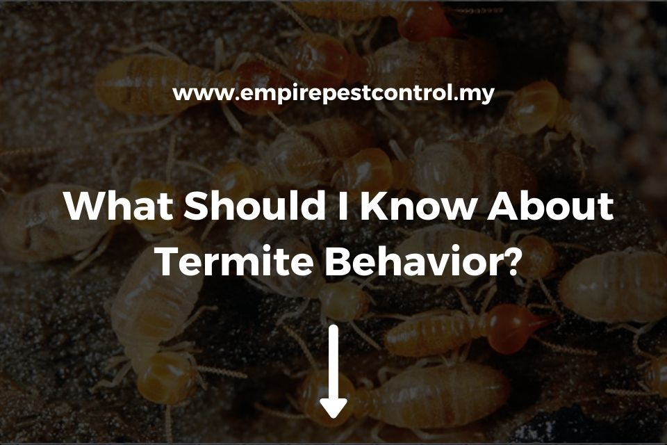 What Should I Know About Termite Behavior