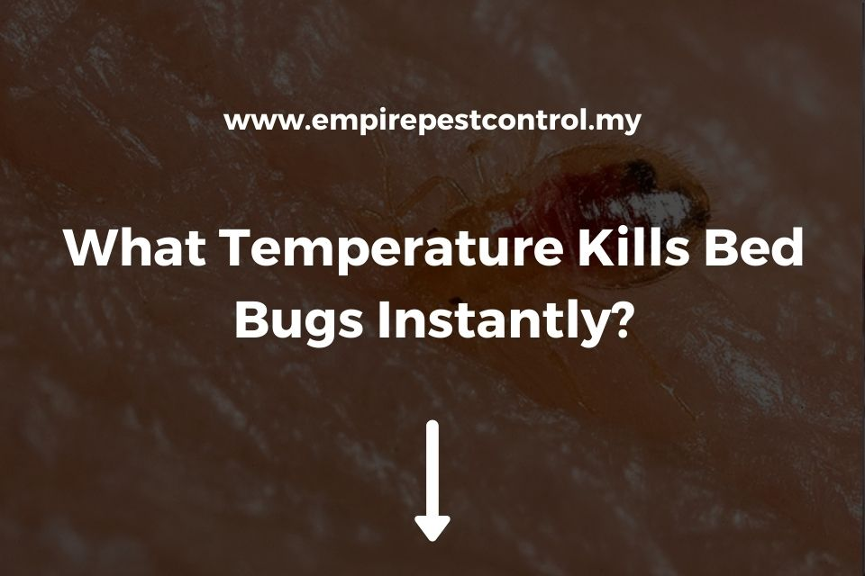 What Temperature Kills Bed Bugs Instantly?