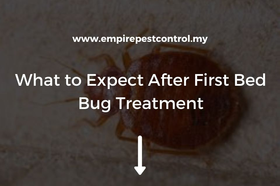 What to Expect After First Bed Bug Treatment