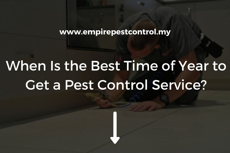 When Is the Best Time of Year to Get a Pest Control Service?