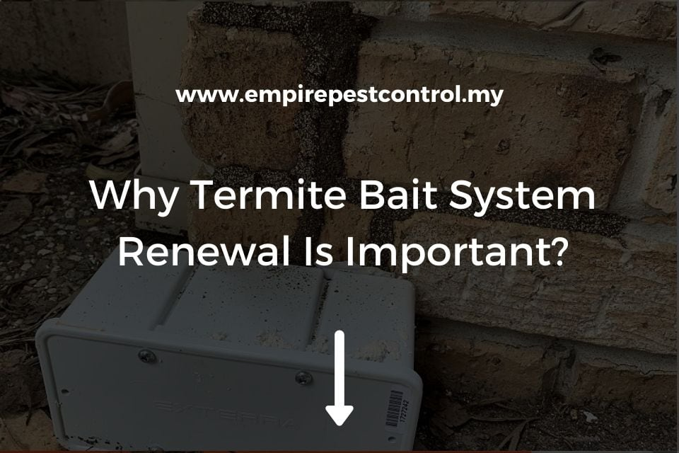 Why Termite Bait System Renewal Is Important?