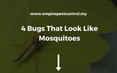 4 Bugs That Look Like Mosquitoes