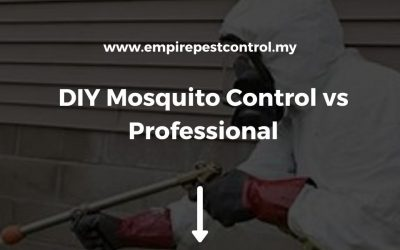 DIY Mosquito Control vs Professional