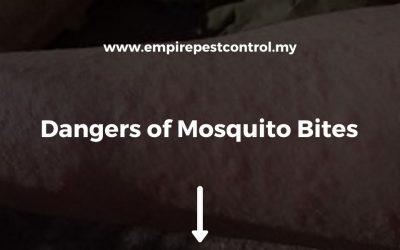 Dangers of Mosquito Bites