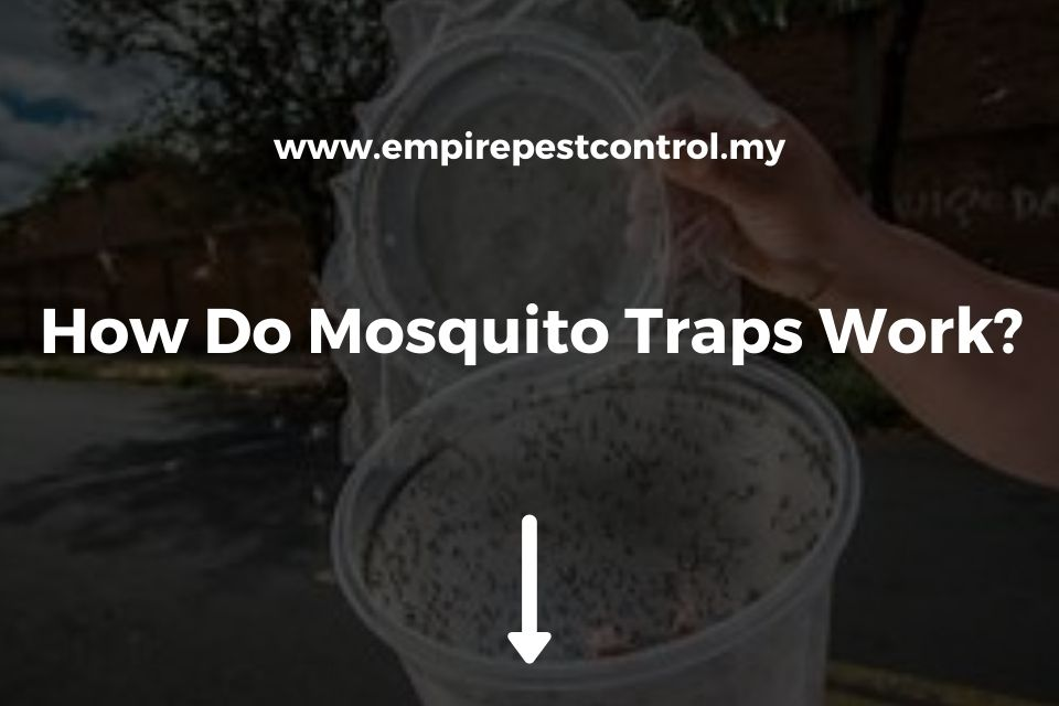 How Do Mosquito Traps Work?
