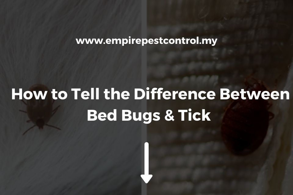 How to Tell the Difference Between Bed Bugs & Ticks