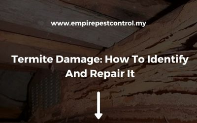 Termite Damage: How To Identify And Repair It